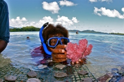A coral sample is harvested for export from the island of Guadalcanal in the Solomon Islands. (Image credit: Ret Talbot/RetTalbot.com via Boston University)